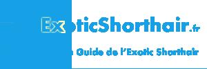 ExoticShorthair.fr