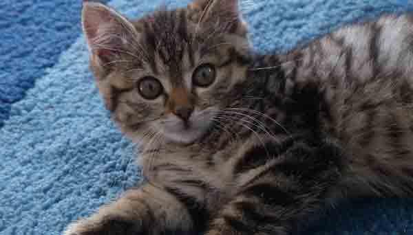 chaton-moquette